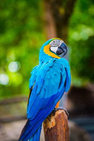 Macaw bird on tree, Thailand.