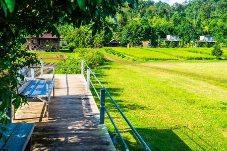 Terrace in strawberry farm, Thailand. Stock Photo