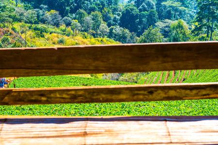 Bamboo bench with strawberry plantation field at Doi Ang Khang, Thailand.