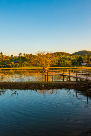 Tree in lake with sunlight, Thailand.