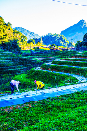 Landscape of Agricultural Plots in Royal Agricultural Station Angkhang, Thailand.
