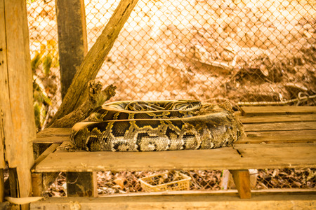 Python in cage, Thailand.