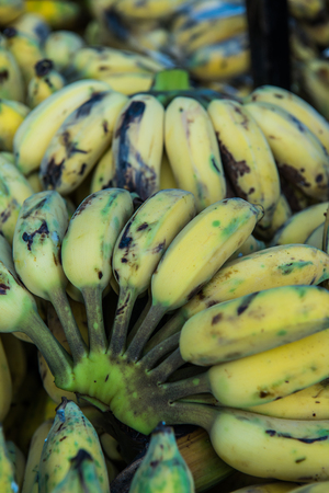 Group of cultivated bananas, Thailand.