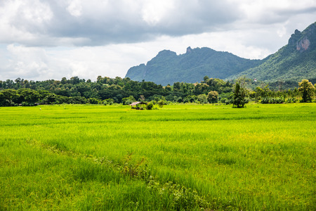 Rice field in Lampang province, Thailand. Stock Photo