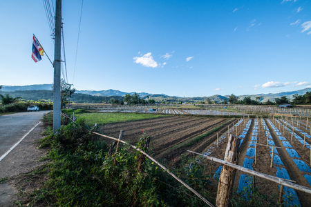 Agricultural field in Mueang Khong district of Chiangmai province, Thailand.