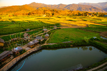 Agricultural field at Wat Phuket view point, Thailand.