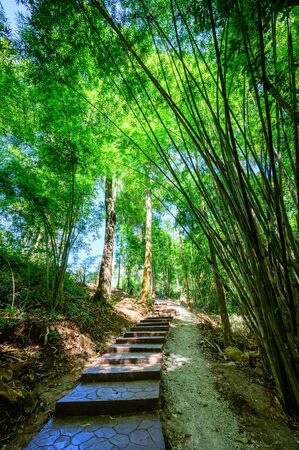 Concrete stair and trail in national park, Lampang province.