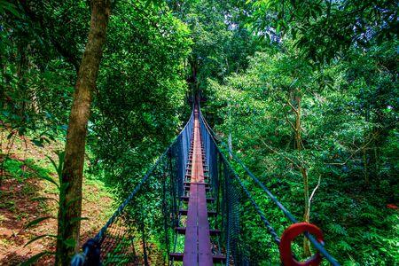 Tree Top Walk in Mae Fah Luang Garden, Chiang Rai province.