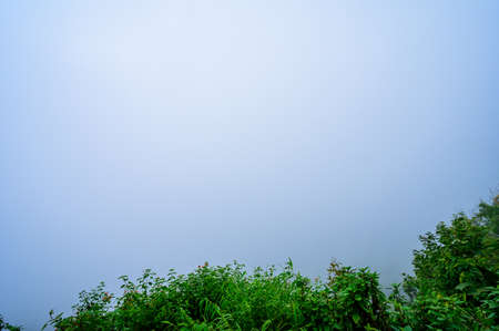 Plants with Fog Background at The Morning, Chiang Mai Province.
