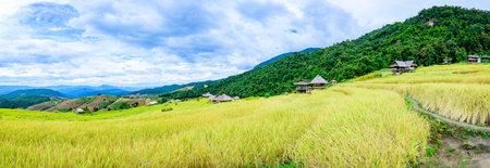 Panorama View of Pa Bong Piang Rice Terraces at Chiang Mai Province, Thailand.
