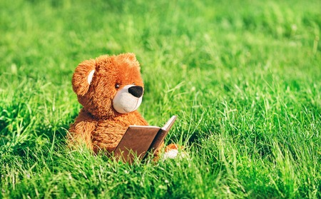 toy bear sits with a book in the grass