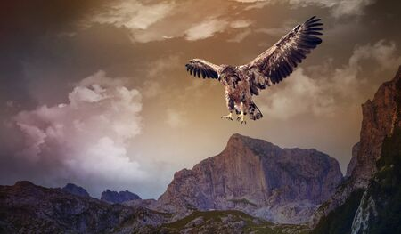an eagle flying over the dark mountains