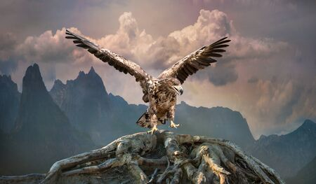 eagle with wings outstretched lands on a wooden roots  in the mountains