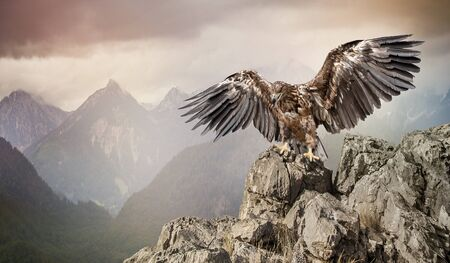 an eagle sits on a stone on mountains background Standard-Bild