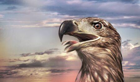 portrait of an eagle on cloudy background Standard-Bild