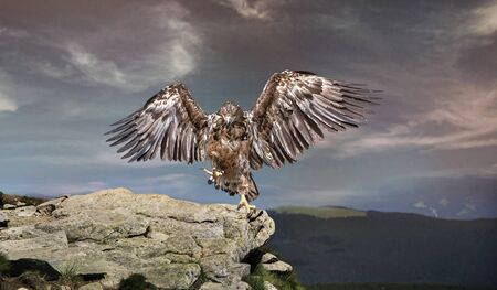 an eagle sits on astone in the mountains