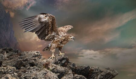 an eagle sits on a stone on the dark sky background
