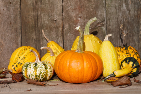 Autumn pumpkins on old barn wooden boards background