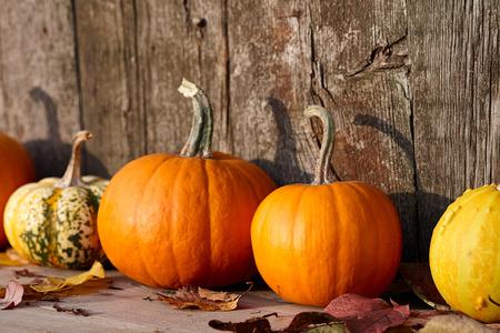 barnwood: Autumn pumpkins on old barn wooden boards background