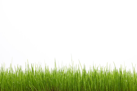 Green grass field isolated on white background Banco de Imagens