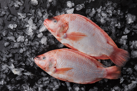 Two raw red tilapia fish on ice
