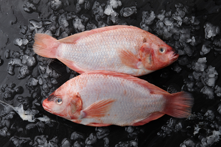 Two red tilapia fish with ice on black stone background, top view