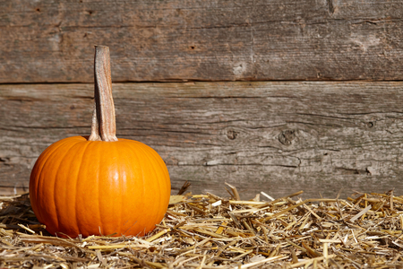 Colorful fall pumpkins on old planks background, copyspace