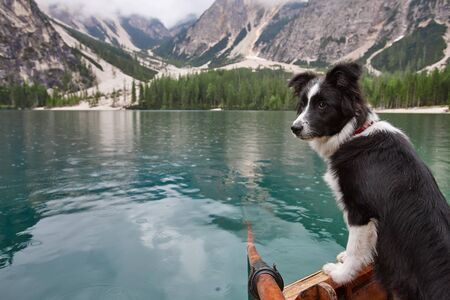 Young black and white border collie dog in wooden boat on blue mountain lake background. Lago di Braies, Italy.
