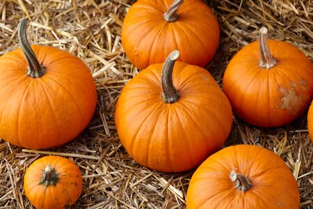 Orange halloween pumpkins on stack of hay or straw, fall display Stockfoto