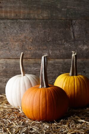 Beautiful Halloween pumpkins in dark old barn, holiday decoration