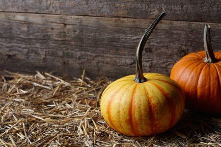 Beautiful Halloween pumpkins in dark old barn, copy space