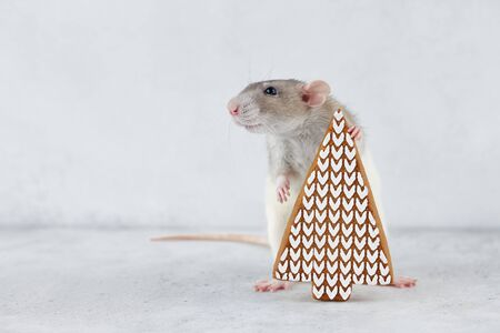 Rat holding gingerbread Christmas tree cookie. Chinese new year 2020 creative concept.