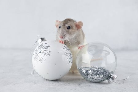 Rat with Christmas glass ball decorations. Chinese new year 2020 creative concept.
