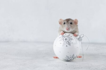 Gray rat with white Christmas glass ball decoration. Chinese new year 2020 creative concept.