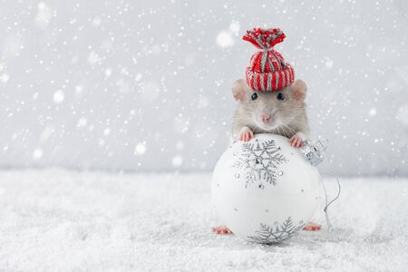 Rat in winter hat holding Christmas white ball decoration in snowy weather. Chinese new year 2020 creative concept.