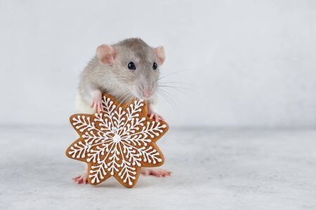 Rat holding gingerbread snowflake cookie. Chinese new year 2020 creative concept. Stock Photo