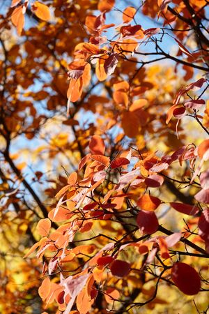 Colorful leaves in autumn forest, bright fall background Banco de Imagens