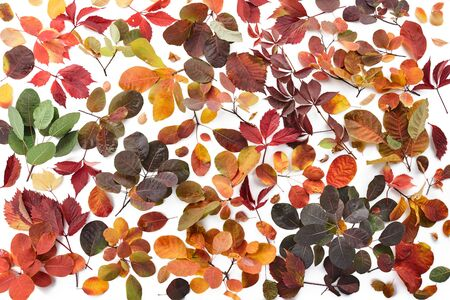 Colorful autumn leaves on white background, top view
