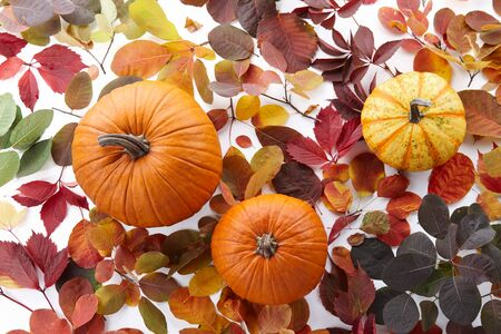Pumpkins and colorful autumn leaves on white background, top view