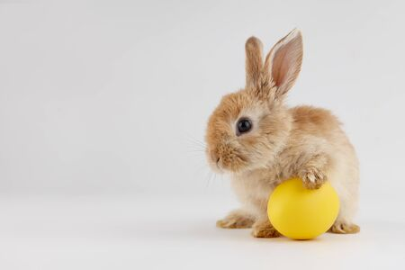 Ginger Easter bunny rabbit with egg on gray background, holiday concept Stock Photo - 138090970