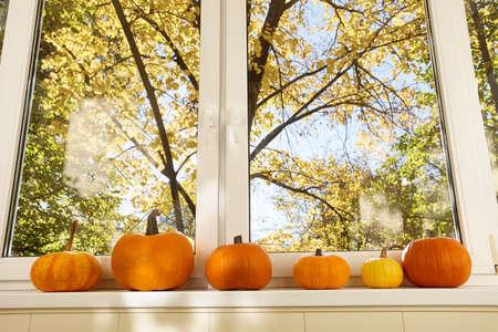 Bright orange pumpkins on windowsill in sunny day, autumn seasonal Standard-Bild
