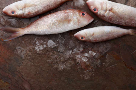 Fresh red mullet fish on stone background, top view