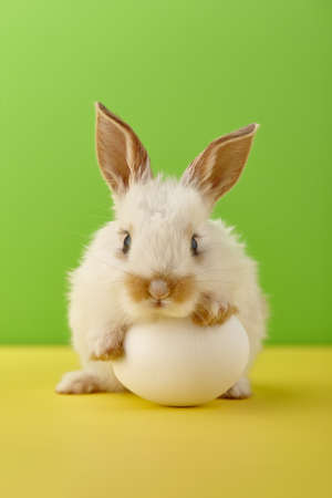White Easter bunny rabbit with egg on yellow and green background