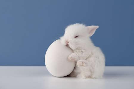 White baby rabbit sleeping on big Easter egg on blue background Standard-Bild