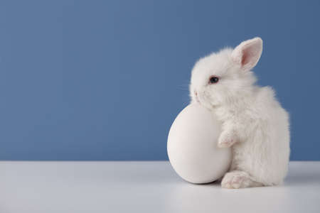 Baby rabbit with big white Easter egg on blue background, copy space