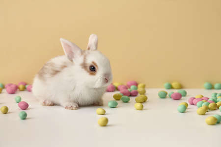 Cute white Easter bunny rabbit with colorful sweets on beige background Standard-Bild
