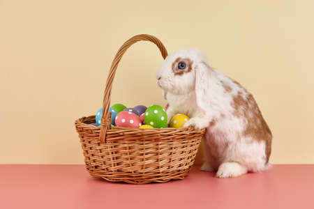 Lop rabbit with basket and Easter eggs on color background