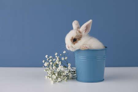 Baby rabbit in flower pot on blue background. Spring Easter concept. Standard-Bild