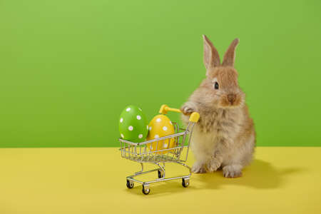 Easter bunny rabbit with shopping basket and painted eggs on green and yellow background