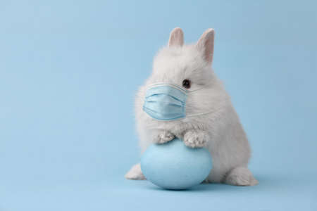 Easter bunny rabbit in virus face mask on blue background. Creative holiday concept.